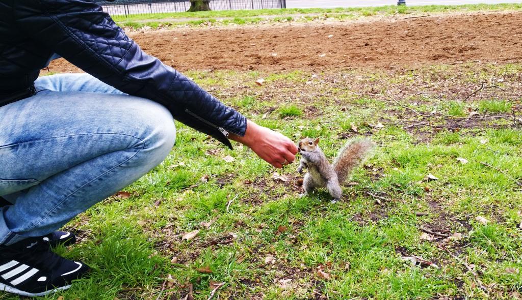 Los parques en Londres son Gratuitos y visitar algunos como Hyde Park es algo que tienes que Hacer.