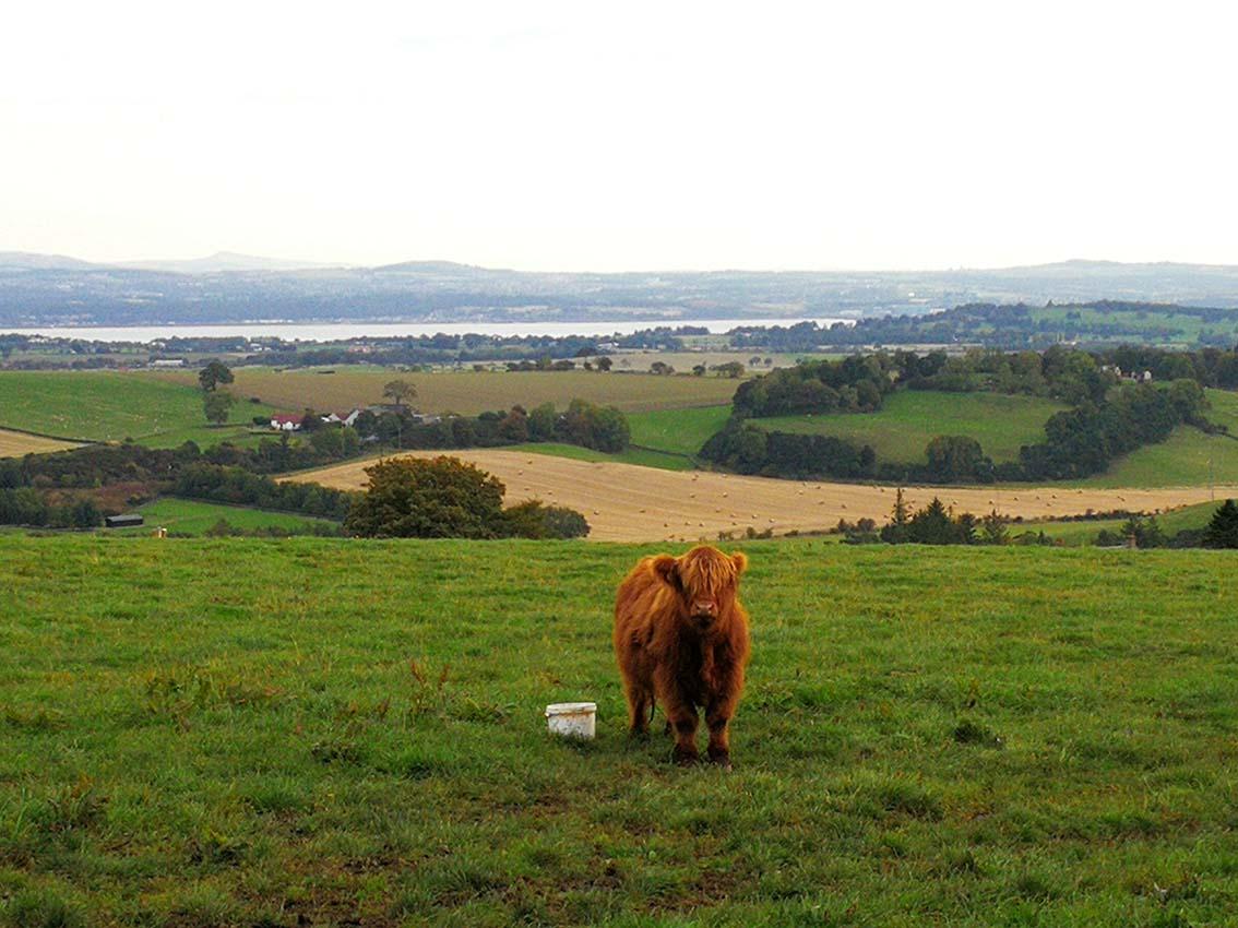 Ver vacas Escocesas en tu viaje por libre